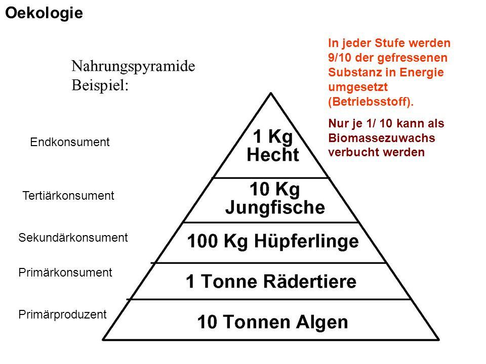 Primärproduzent Primärkonsument Sekundärkonsument Tertiärkonsument Endkonsument In jeder Stufe werden 9/10 der gefressenen Substanz in Energie umgesetzt (Betriebsstoff).