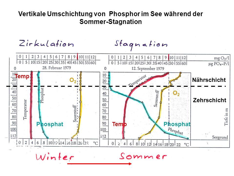 Vertikale Umschichtung von Phosphor im See während der Sommer-Stagnation O2O2 Phosphat Temp O2O2 Phosphat Nährschicht Zehrschicht