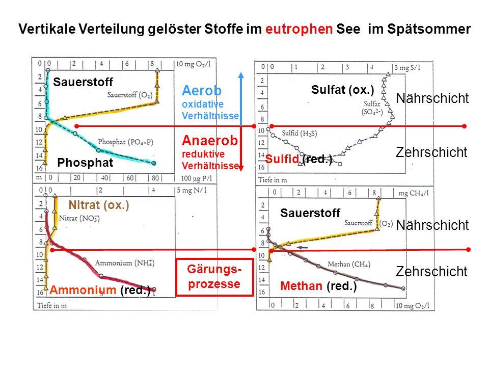Vertikale Verteilung gelöster Stoffe im eutrophen See im Spätsommer Sauerstoff Phosphat Nitrat (ox.) Ammonium (red.) Sulfid (red.) Sulfat (ox.) Methan