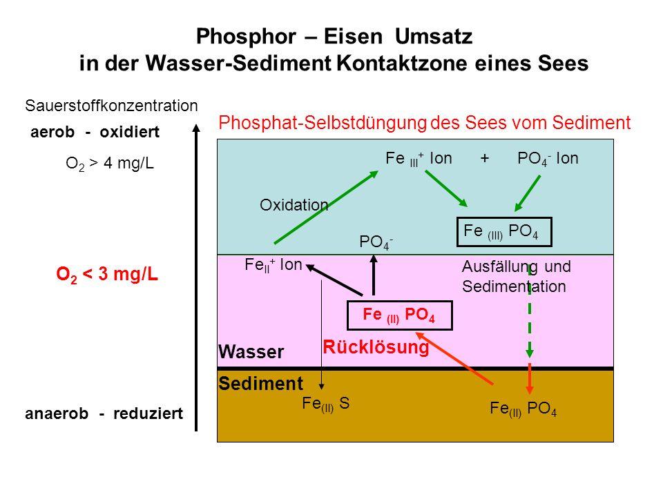 Fe II + Ion Fe III + Ion + PO 4 - Ion Fe (II) PO 4 Fe (II) S Fe (II) PO 4 Fe (III) PO 4 anaerob - reduziert O 2 < 3 mg/L O 2 > 4 mg/L aerob - oxidiert Sauerstoffkonzentration Sediment Wasser Phosphor – Eisen Umsatz in der Wasser-Sediment Kontaktzone eines Sees Oxidation Ausfällung und Sedimentation Rücklösung PO 4 - Phosphat-Selbstdüngung des Sees vom Sediment