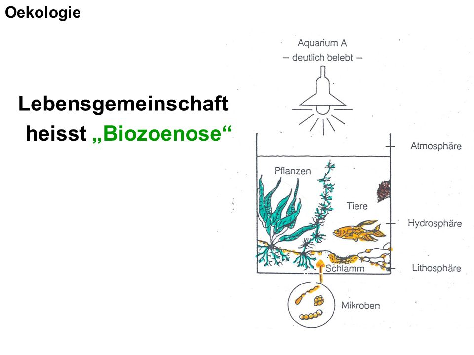 "Oekologie Lebensgemeinschaft heisst ""Biozoenose"