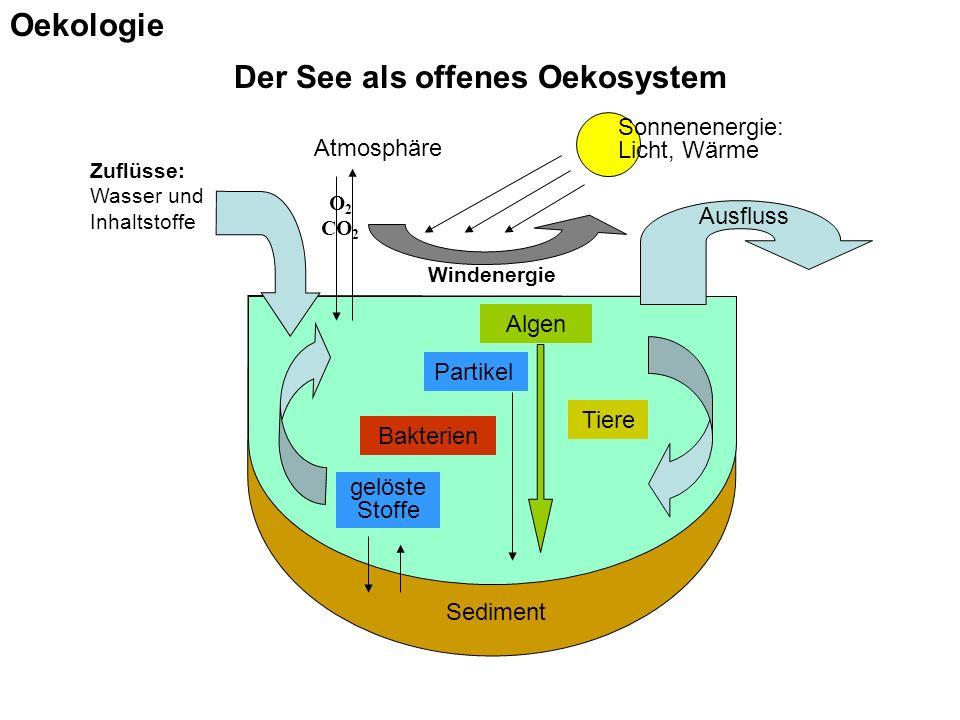Der See als offenes Oekosystem Sediment Zuflüsse: Wasser und Inhaltstoffe Ausfluss Sonnenenergie: Licht, Wärme Algen gelöste Stoffe Tiere Bakterien Atmosphäre Windenergie O 2 CO 2 Partikel Oekologie