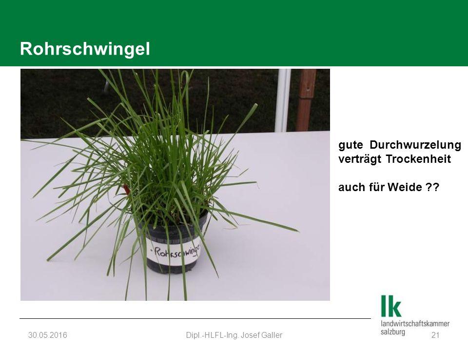 Rohrschwingel 30.05.2016Dipl.-HLFL-Ing.