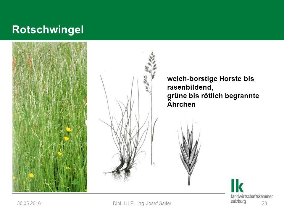 Rotschwingel 30.05.2016Dipl.-HLFL-Ing.