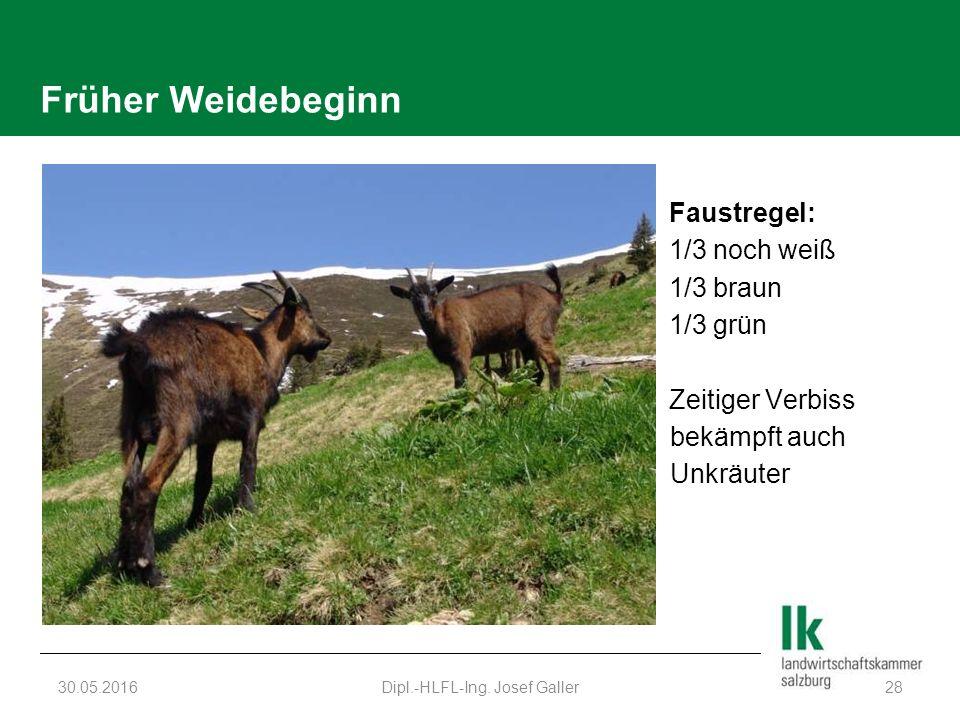 Früher Weidebeginn Faustregel: 1/3 noch weiß 1/3 braun 1/3 grün Zeitiger Verbiss bekämpft auch Unkräuter 30.05.2016Dipl.-HLFL-Ing. Josef Galler28
