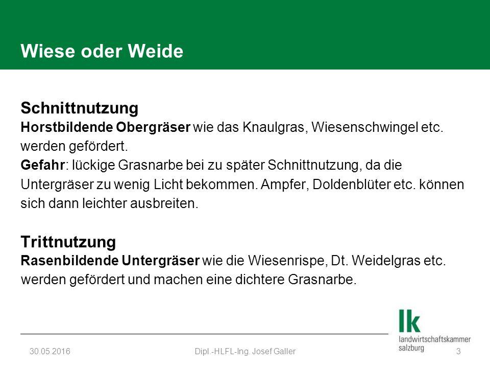 Wiese oder Weide Schnittnutzung Horstbildende Obergräser wie das Knaulgras, Wiesenschwingel etc. werden gefördert. Gefahr: lückige Grasnarbe bei zu sp