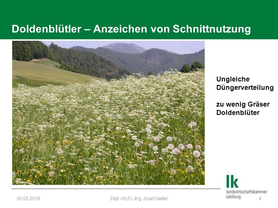 Doldenblütler – Anzeichen von Schnittnutzung 30.05.2016Dipl.-HLFL-Ing. Josef Galler4 Ungleiche Düngerverteilung zu wenig Gräser Doldenblüter