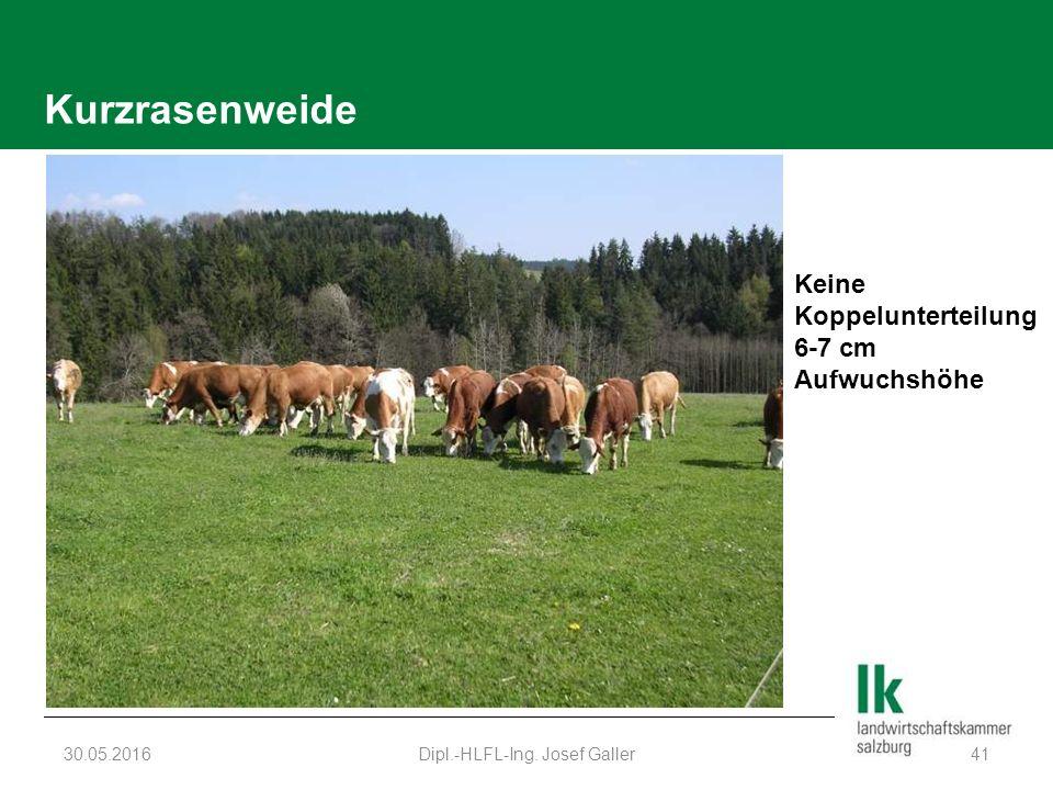 Kurzrasenweide 30.05.2016Dipl.-HLFL-Ing. Josef Galler41 Keine Koppelunterteilung 6-7 cm Aufwuchshöhe