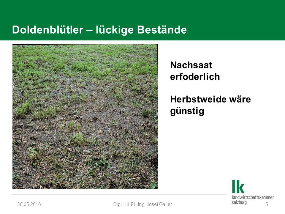 Doldenblütler – lückige Bestände 30.05.2016Dipl.-HLFL-Ing. Josef Galler5 Nachsaat erfoderlich Herbstweide wäre günstig