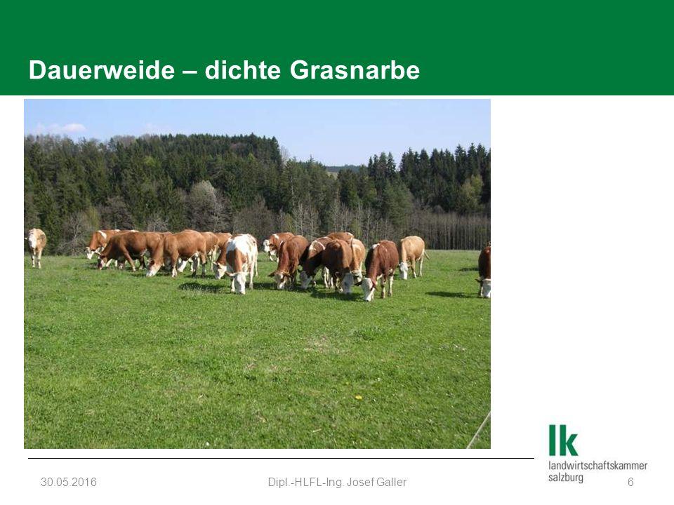 Dauerweide – dichte Grasnarbe 30.05.2016Dipl.-HLFL-Ing. Josef Galler6
