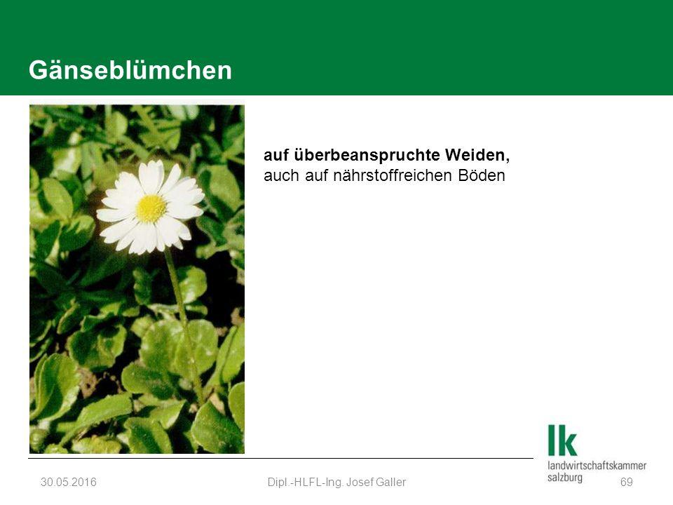 Gänseblümchen 30.05.2016Dipl.-HLFL-Ing. Josef Galler69 auf überbeanspruchte Weiden, auch auf nährstoffreichen Böden