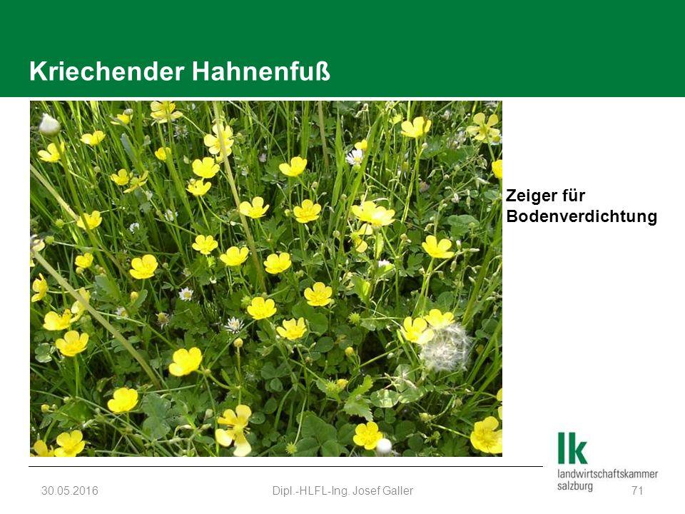 Kriechender Hahnenfuß 30.05.2016Dipl.-HLFL-Ing. Josef Galler71 Zeiger für Bodenverdichtung