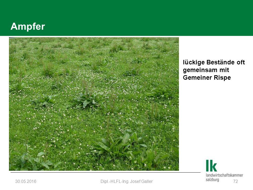 Ampfer 30.05.2016Dipl.-HLFL-Ing. Josef Galler72 lückige Bestände oft gemeinsam mit Gemeiner Rispe