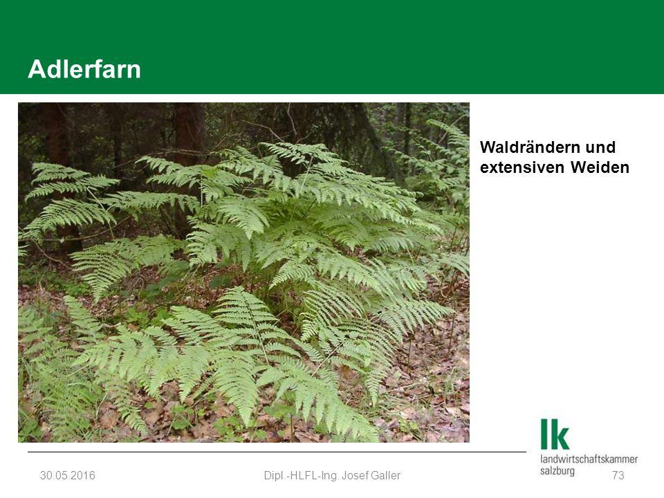 Adlerfarn 30.05.2016Dipl.-HLFL-Ing. Josef Galler73 Waldrändern und extensiven Weiden