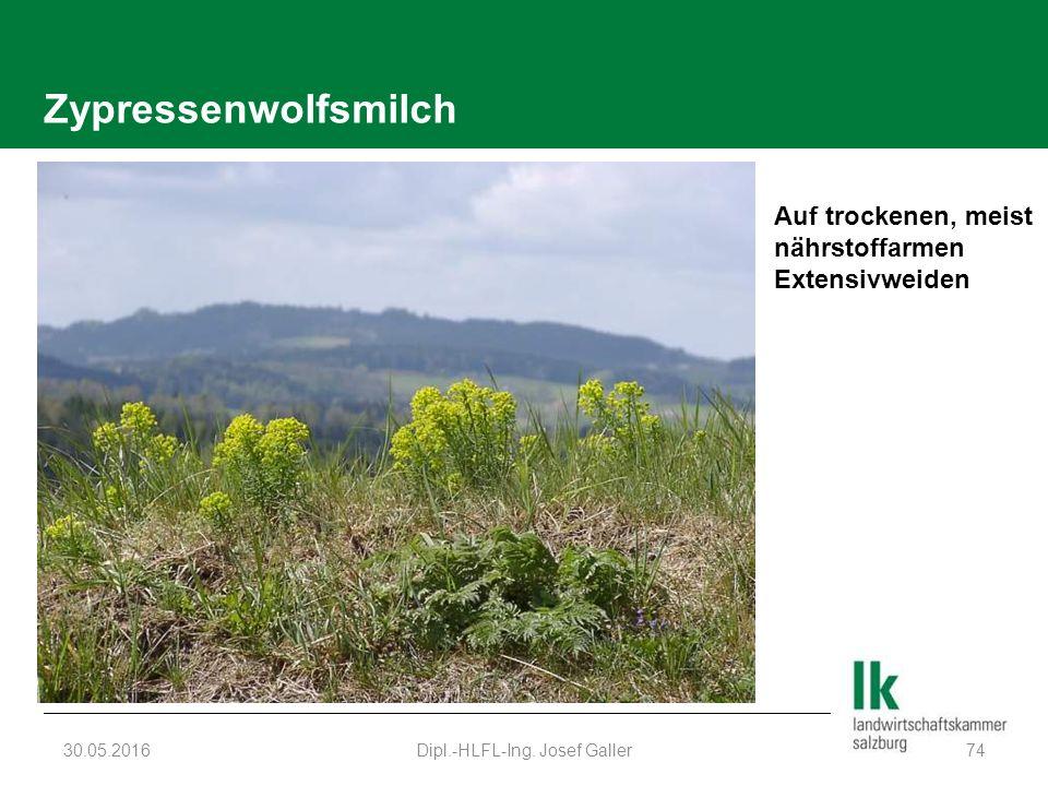 Zypressenwolfsmilch 30.05.2016Dipl.-HLFL-Ing. Josef Galler74 Auf trockenen, meist nährstoffarmen Extensivweiden