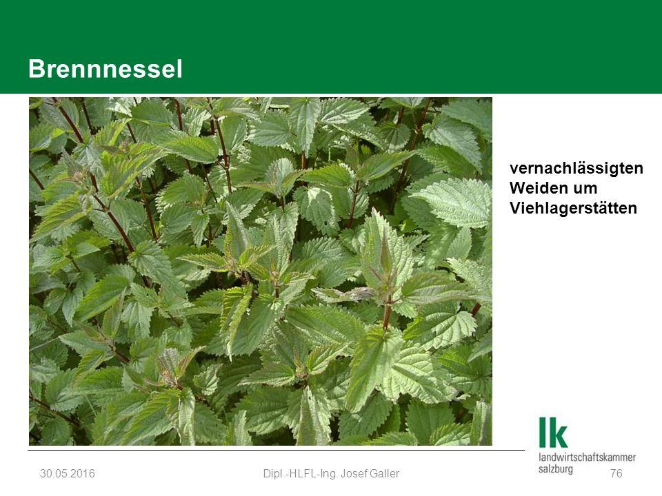 Brennnessel 30.05.2016Dipl.-HLFL-Ing. Josef Galler76 vernachlässigten Weiden um Viehlagerstätten