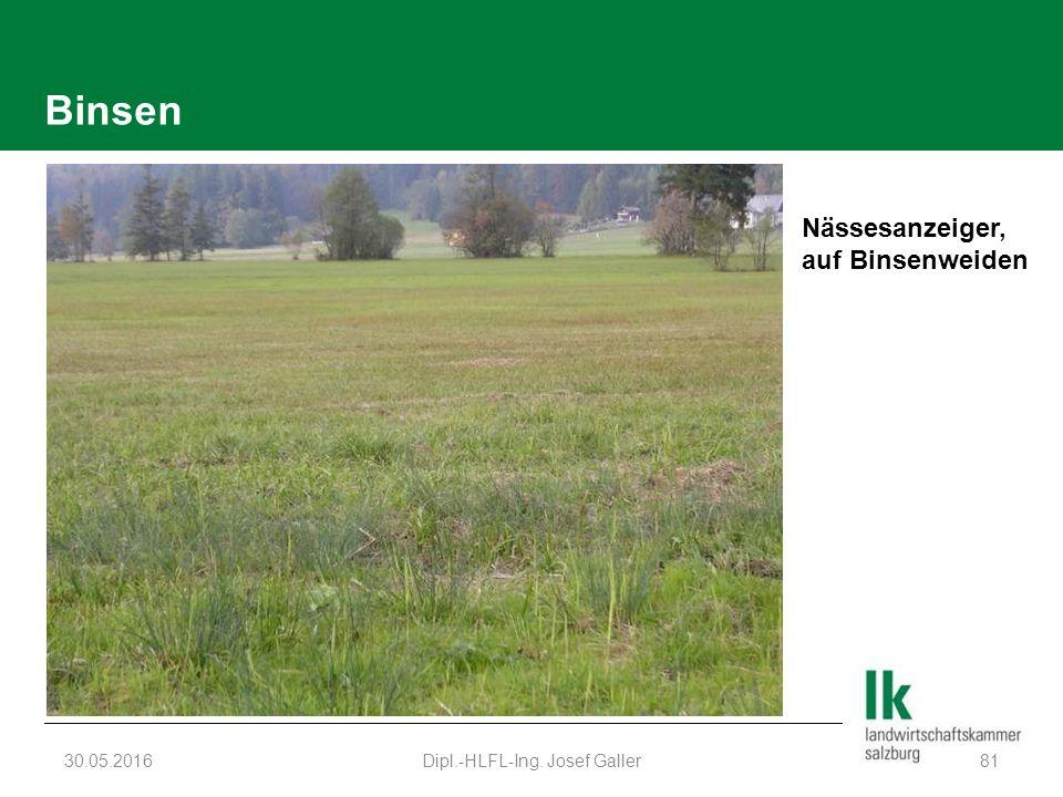 Binsen 30.05.2016Dipl.-HLFL-Ing. Josef Galler81 Nässesanzeiger, auf Binsenweiden