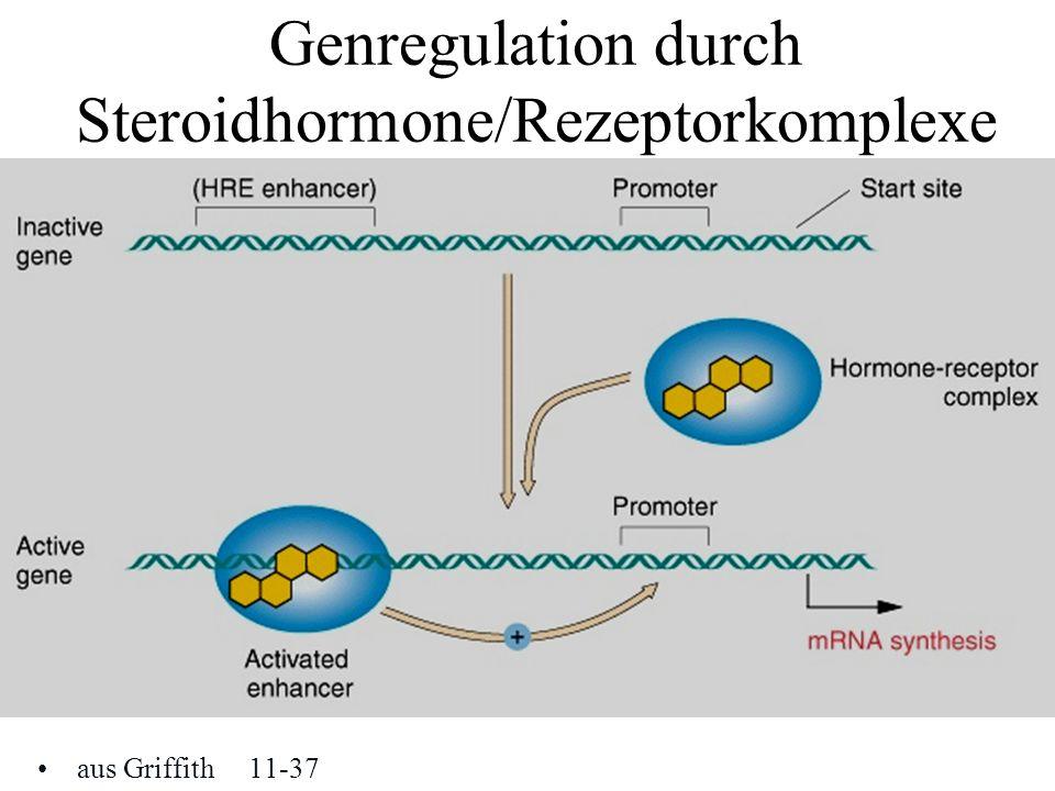 Genregulation durch Steroidhormone/Rezeptorkomplexe aus Griffith11-37