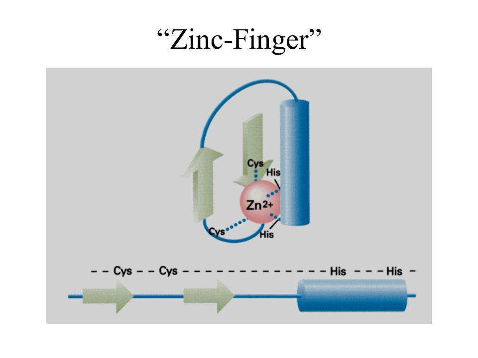 Zinc-Finger