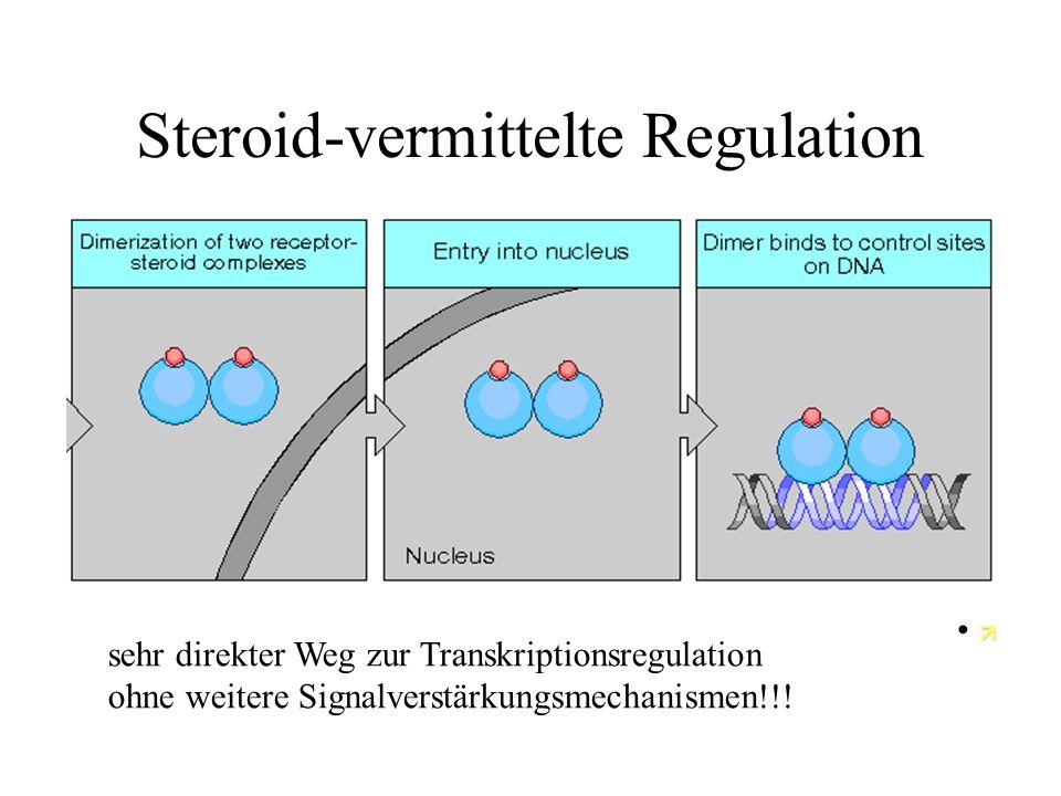 Wolpert09.17 Steroid-vermittelte Regulation  sehr direkter Weg zur Transkriptionsregulation ohne weitere Signalverstärkungsmechanismen!!!