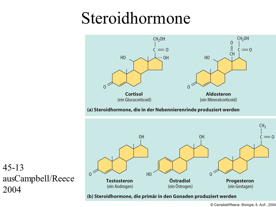 Steroidhormone 45-13 ausCampbell/Reece 2004