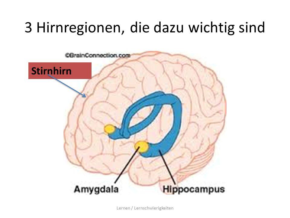 3 Hirnregionen, die dazu wichtig sind Lernen / Lernschwierigkeiten Stirnhirn
