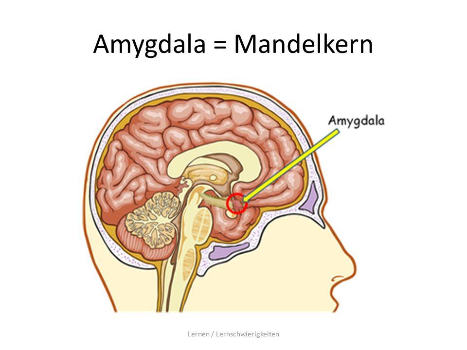 Amygdala = Mandelkern Lernen / Lernschwierigkeiten