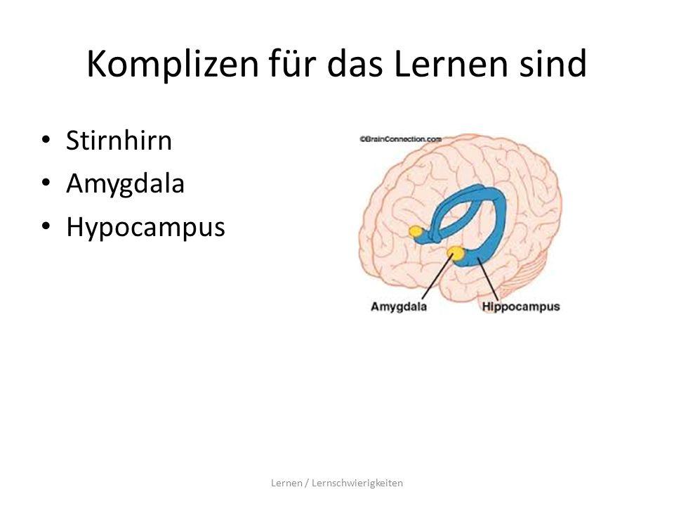 Komplizen für das Lernen sind Stirnhirn Amygdala Hypocampus Lernen / Lernschwierigkeiten