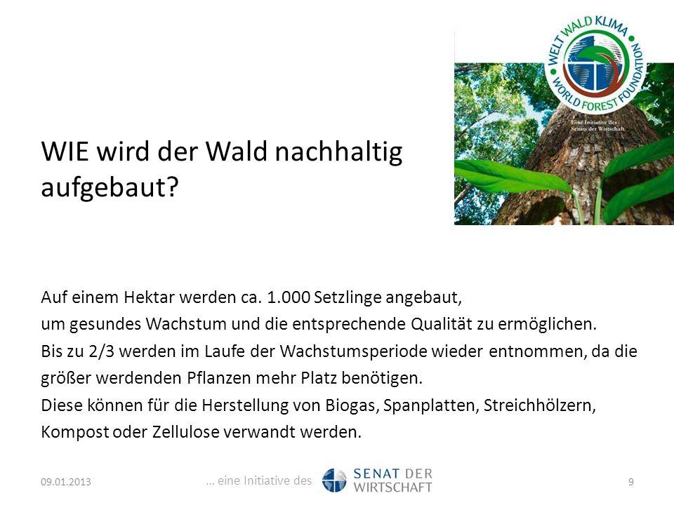 … eine Initiative des WIE wird der Wald nachhaltig aufgebaut.