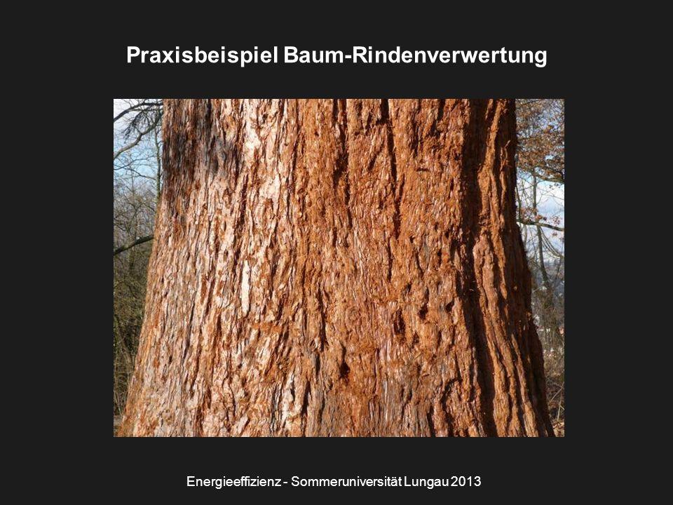 Energieeffizienz - Sommeruniversität Lungau 2013 Praxisbeispiel Baum-Rindenverwertung