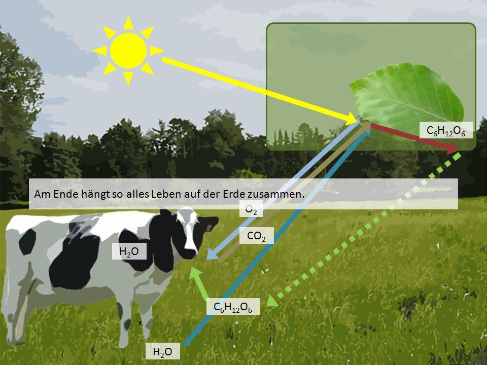 H2OH2O O2O2 C 6 H 12 O 6 H2OH2O Am Ende hängt so alles Leben auf der Erde zusammen. CO 2