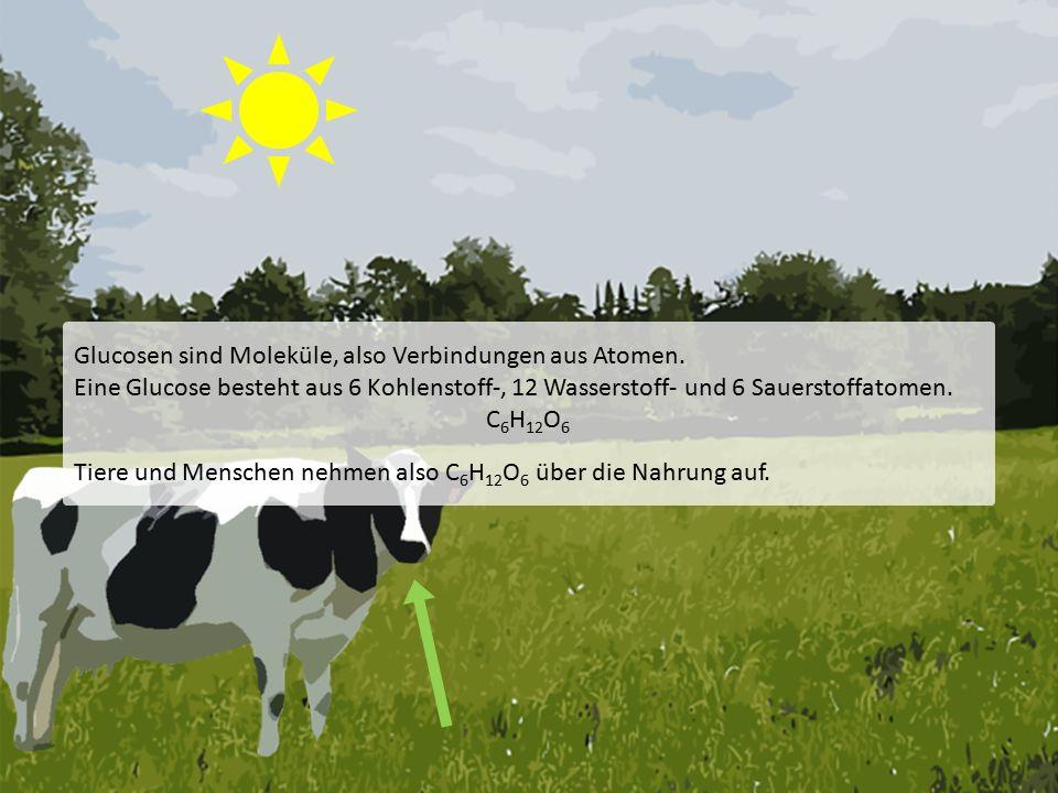 Quellenverzeichnis: Artikel Photosynthese.In: Wikipedia, Die freie Enzyklopädie.