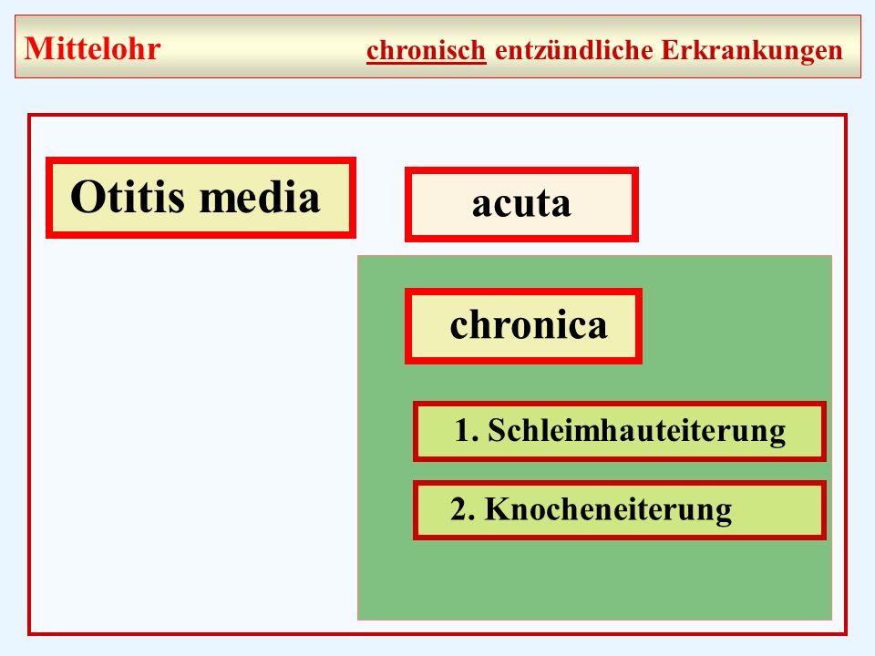 Otitis media acuta chronica 1.Schleimhauteiterung 2.