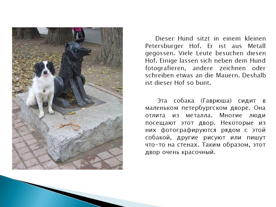 Dieser Hund sitzt in einem kleinen Petersburger Hof.