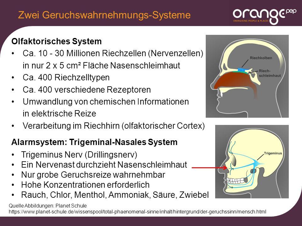 Olfaktorisches System Ca.