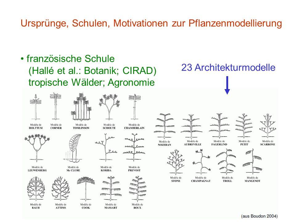 Ursprünge, Schulen, Motivationen zur Pflanzenmodellierung französische Schule (Hallé et al.: Botanik; CIRAD) tropische Wälder; Agronomie 23 Architekturmodelle