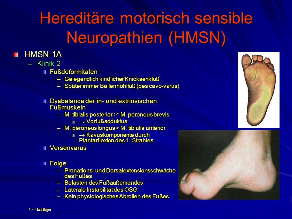 Hereditäre motorisch sensible Neuropathien (HMSN) HMSN-1A –Klinik 2 Fußdeformitäten –Gelegendlich kindlicher Knicksenkfuß –Später immer Ballenhohlfuß (pes cavo-varus) Dysbalance der in- und extrinsischen Fußmuskeln –M.