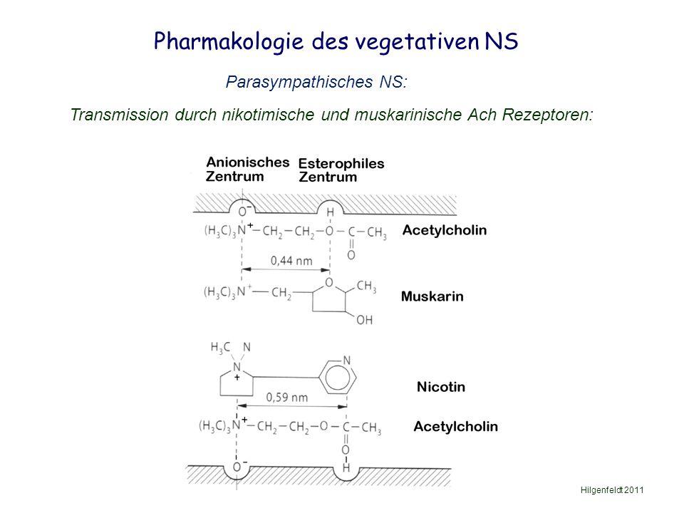 Pharmakologie des vegetativen NS Hilgenfeldt 2011 Parasympathisches NS: Transmission durch nikotimische und muskarinische Ach Rezeptoren: