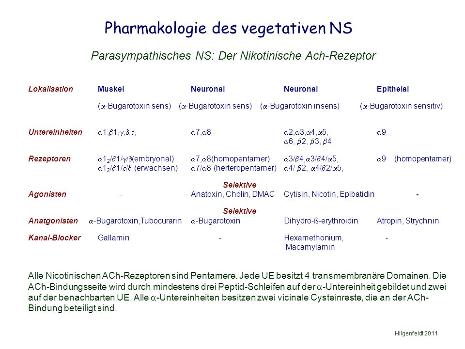 Pharmakologie des vegetativen NS Hilgenfeldt 2011 Parasympathisches NS: Der Nikotinische Ach-Rezeptor LokalisationMuskelNeuronalNeuronalEpithelal (  -Bugarotoxin sens) (  -Bugarotoxin sens) (  -Bugarotoxin insens) (  -Bugarotoxin sensitiv) Untereinheiten  1,  1, , , ,  7,  8  2,  3,  4,  5,  9  6,  2,  3,  4 Rezeptoren  1 2 /  1/  /  (embryonal)  7,  8(homopentamer)  3/  4,  3/  4/  5,  9 (homopentamer)  1 2 /  1/  /  (erwachsen)  7/  8 (herteropentamer)  4/  2,  4/  2/  5, Selektive Agonisten -Anatoxin, Cholin, DMACCytisin, Nicotin, Epibatidin - Selektive Anatgonisten  -Bugarotoxin,Tubocurarin  -Bugarotoxin Dihydro-ß-erythroidinAtropin, Strychnin Kanal-BlockerGallamin - Hexamethonium, - Macamylamin Alle Nicotinischen ACh-Rezeptoren sind Pentamere.