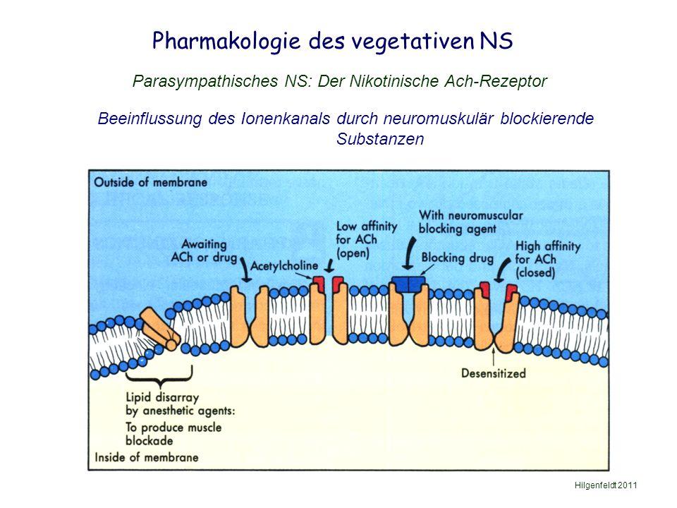 Pharmakologie des vegetativen NS Hilgenfeldt 2011 Parasympathisches NS: Der Nikotinische Ach-Rezeptor Beeinflussung des Ionenkanals durch neuromuskulär blockierende Substanzen