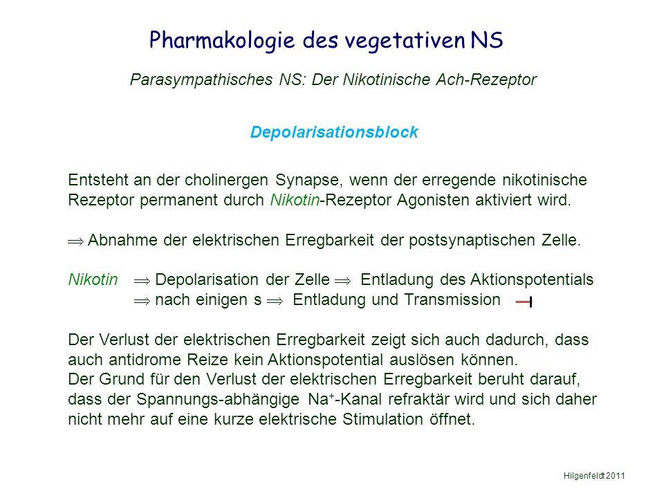 Pharmakologie des vegetativen NS Hilgenfeldt 2011 Parasympathisches NS: Der Nikotinische Ach-Rezeptor Depolarisationsblock Entsteht an der cholinergen Synapse, wenn der erregende nikotinische Rezeptor permanent durch Nikotin-Rezeptor Agonisten aktiviert wird.