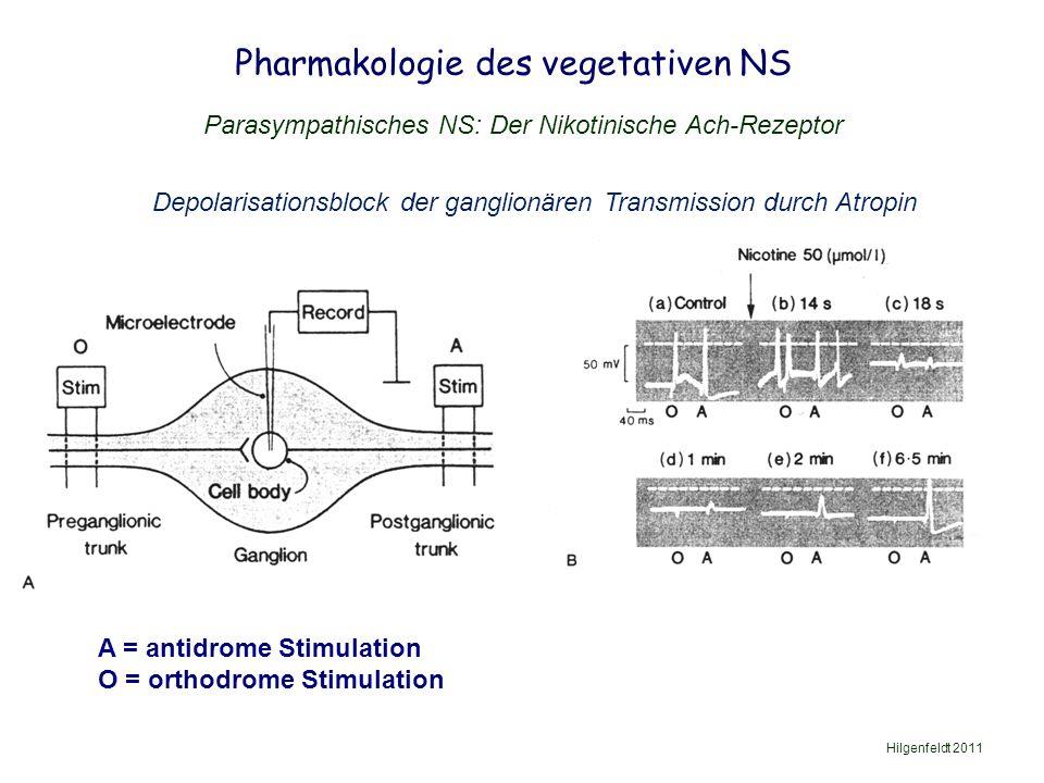 Pharmakologie des vegetativen NS Hilgenfeldt 2011 Parasympathisches NS: Der Nikotinische Ach-Rezeptor Depolarisationsblock der ganglionären Transmission durch Atropin A = antidrome Stimulation O = orthodrome Stimulation