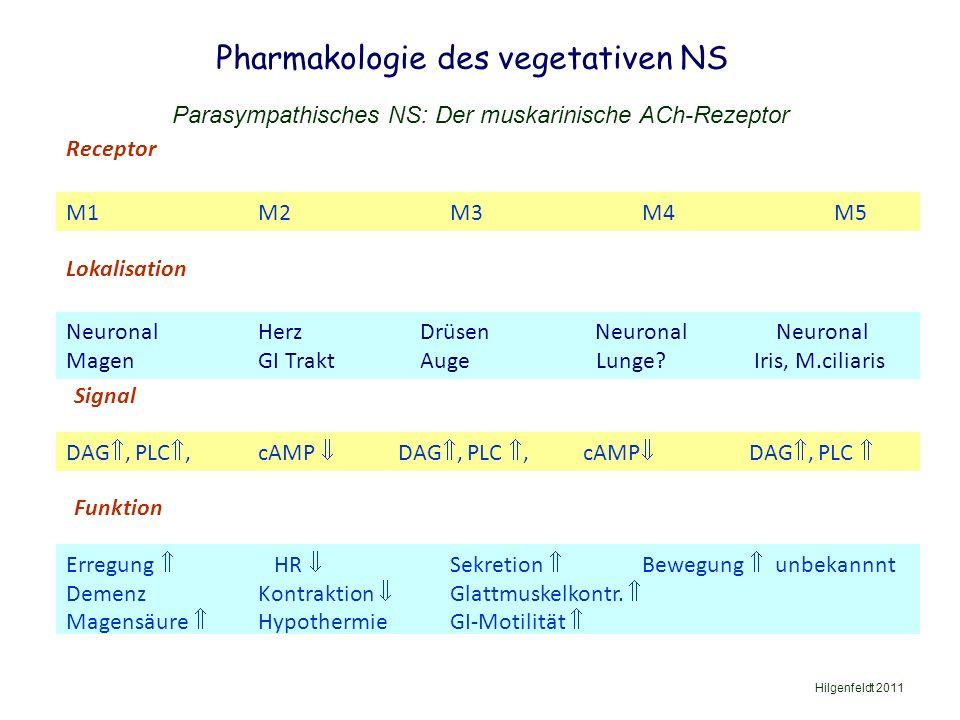 Pharmakologie des vegetativen NS Hilgenfeldt 2011 Parasympathisches NS: Der muskarinische ACh-Rezeptor M1M2M3M4M5 Signal DAG , PLC ,cAMP  DAG , PLC , cAMP  DAG , PLC  Receptor Lokalisation NeuronalHerz Drüsen Neuronal Neuronal MagenGI Trakt Auge Lunge.