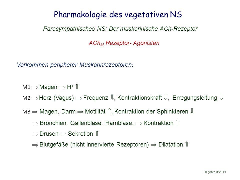 Pharmakologie des vegetativen NS Hilgenfeldt 2011 Parasympathisches NS: Der muskarinische ACh-Rezeptor ACh M Rezeptor- Agonisten Vorkommen peripherer Muskarinrezeptoren: M1  Magen  H +  M2  Herz (Vagus)  Frequenz , Kontraktionskraft , Erregungsleitung  M3  Magen, Darm  Motilität , Kontraktion der Sphinkteren   Bronchien, Gallenblase, Harnblase,  Kontraktion   Drüsen  Sekretion   Blutgefäße (nicht innervierte Rezeptoren)  Dilatation 