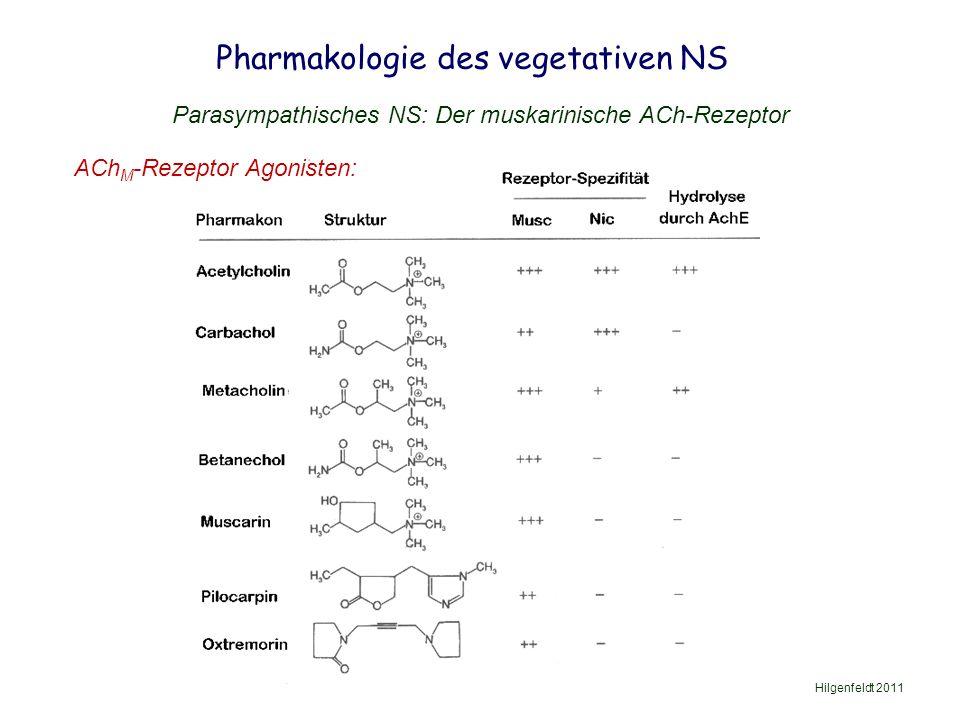 Pharmakologie des vegetativen NS Hilgenfeldt 2011 Parasympathisches NS: Der muskarinische ACh-Rezeptor ACh M -Rezeptor Agonisten: