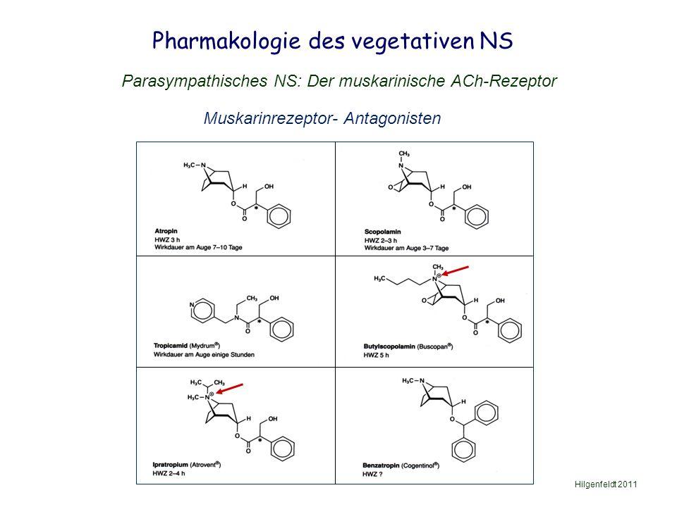 Pharmakologie des vegetativen NS Hilgenfeldt 2011 Parasympathisches NS: Der muskarinische ACh-Rezeptor Muskarinrezeptor- Antagonisten