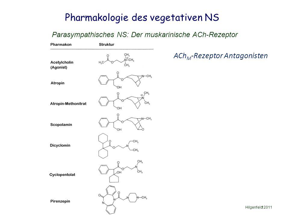 Pharmakologie des vegetativen NS Hilgenfeldt 2011 Parasympathisches NS: Der muskarinische ACh-Rezeptor ACh M -Rezeptor Antagonisten