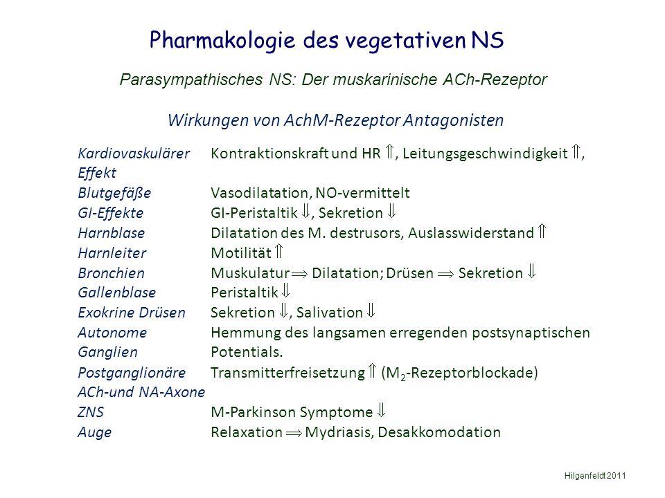 Pharmakologie des vegetativen NS Hilgenfeldt 2011 Parasympathisches NS: Der muskarinische ACh-Rezeptor Wirkungen von AchM-Rezeptor Antagonisten Kardiovaskulärer Kontraktionskraft und HR , Leitungsgeschwindigkeit , Effekt BlutgefäßeVasodilatation, NO-vermittelt GI-EffekteGI-Peristaltik , Sekretion  HarnblaseDilatation des M.