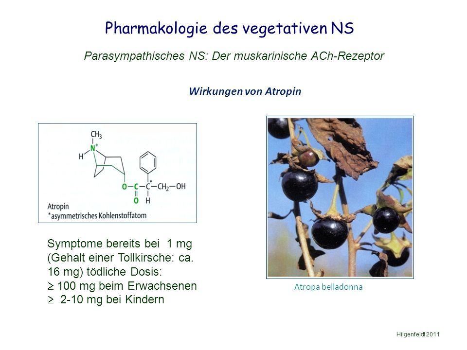 Pharmakologie des vegetativen NS Hilgenfeldt 2011 Parasympathisches NS: Der muskarinische ACh-Rezeptor Wirkungen von Atropin Atropa belladonna Symptome bereits bei 1 mg (Gehalt einer Tollkirsche: ca.