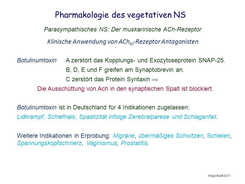 Pharmakologie des vegetativen NS Hilgenfeldt 2011 Parasympathisches NS: Der muskarinische ACh-Rezeptor Botulinumtoxin A zerstört das Kopplungs- und Exozytoseprotein SNAP-25.